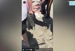 Polis genç kızın kafasını yumrukladı