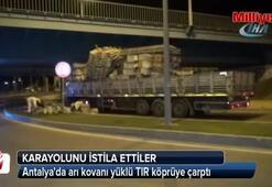 Antalyada arı kovanı yüklü TIR köprüye çarptı