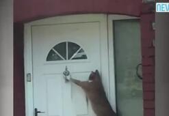 Bu kedi kapı çalıyor