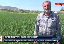 Çiftçinin yeni gözdesi Kinoa