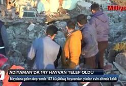 Depremde 147 küçükbaş hayvan telef oldu