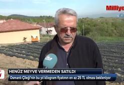 Osmanlı Çileği gün sayıyor