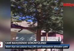 Erzincan'da cami bahçesinde Allah diyen kuş görüntülendi