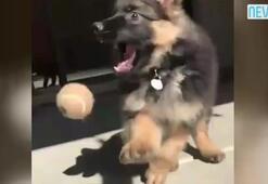 Şirin köpeğin sahibinden gülme krizine sokan video