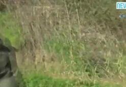 Karşısında inek sürüsünü gören muhabir röportajı bırakıp kaçtı