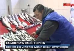 Karadeniz'in balığı Ege'den