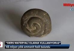 65 milyon yıllık ammonit fosili