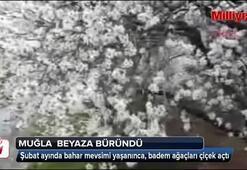 Muğlada badem ağaçları çiçek açtı