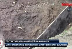 Defineciler zeytin tarlasına 2 metre çukur kazdı