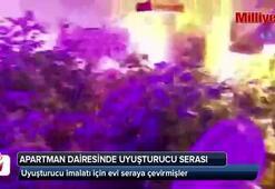 Apartman dairesindeki uyuşturucu serasına polis baskını