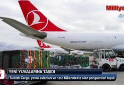 Turkish Cargo Çin'e penguen ve aslan taşıdı