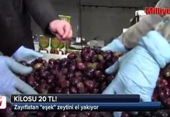 Zayıflatan eşek zeytini el yakıyor