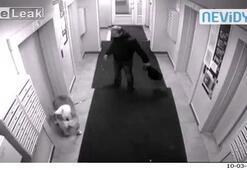 Asansöre bindi, köpeğini unuttu