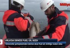 Urlada üniversite yerleşkesinden denize akan fuel oil, kirliliğe neden oldu