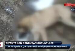 Çok sayıda köpeğin zehirlenerek öldürüldüğü iddiası