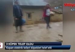 Mersin'de kopan elektrik telleri köpekleri telef etti