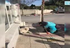 Sokak köpeğine arabeskli serenat