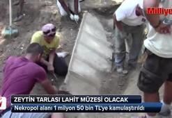 Zeytin tarlası lahit müzesi olacak