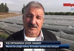 Mersin'de kış ortasında çilek hasadı