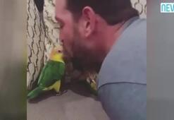 Kendini öptüren papağan