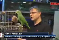 Zikir ettiği söylenen Papağanın fiyatı 7 bin lira