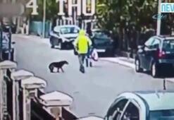 Kapkaççı sokak köpeğine takıldı