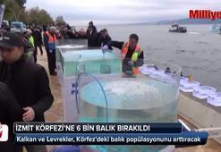 İzmit Körfezine 6 bin balık bırakıldı