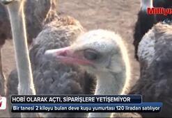 Türkiyenin en büyük deve kuşu üretim çiftliği Çanakkalede