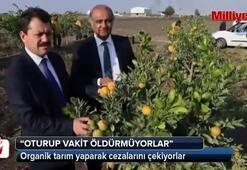 Organik tarım yaparak cezalarını çekiyorlar