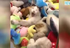 Oyuncak yakalama makinesine kedi girerse...