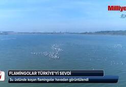 Su üstünde koşan flamingolar havadan görüntülendi