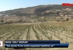 İstanbuldan kaçıp İpek Böcekçiliğine başladı