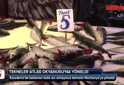 Karadeniz'de beklenen balık avı olmayınca tekneler Moritanya'ya yöneldi