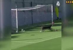 Real Madridin şut çalıştı