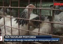 Süs tavukları Trabzonda podyuma çıkacak