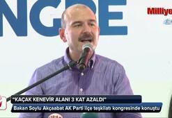 İçişleri Bakanı Süleyman Soylu: Kenevir ekili alanları tarumar ettik