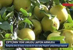 Konya'da çiftçinin yeni umudu Japon armudu