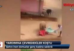 Domuzlar kadına böyle saldırdı