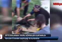 Zifte bulanan yavru köpekler kurtarıldı
