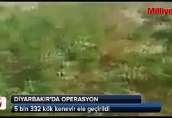 Diyarbakırda 5 bin 332 kök kenevir ele geçirildi