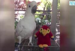 Oyuncak papağana gıcık olunca...