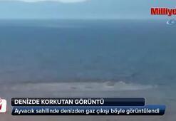 Ayvacık sahilinde denizde ürküten görüntü