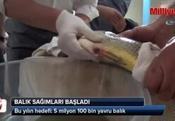 Balık sağımı başladı, hedef 5 milyon balık