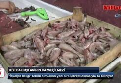 Kıyı balıkçılarının vazgeçilmezi