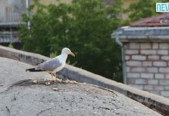 İstanbulu bir de böyle izleyin...