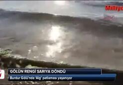 Burdur Gölünde alg patlaması yaşanıyor