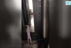 Dansçı kediler internet ortamını sallıyor