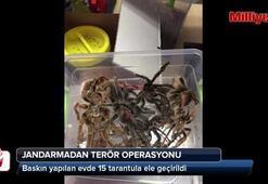 Terör baskınından tarantula çıktı