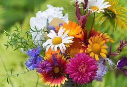 Çiçeklerin Anlamları Nedir