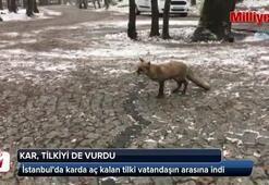 İstanbulda karda aç kalan tilki vatandaşın arasına indi